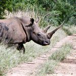 Parc Kruger en Afrique du Sud